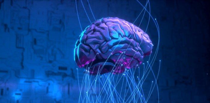 【脳科学】脳に性別はないと発表される:メタアナリシスによる脳の新事実  [猪木いっぱい★]