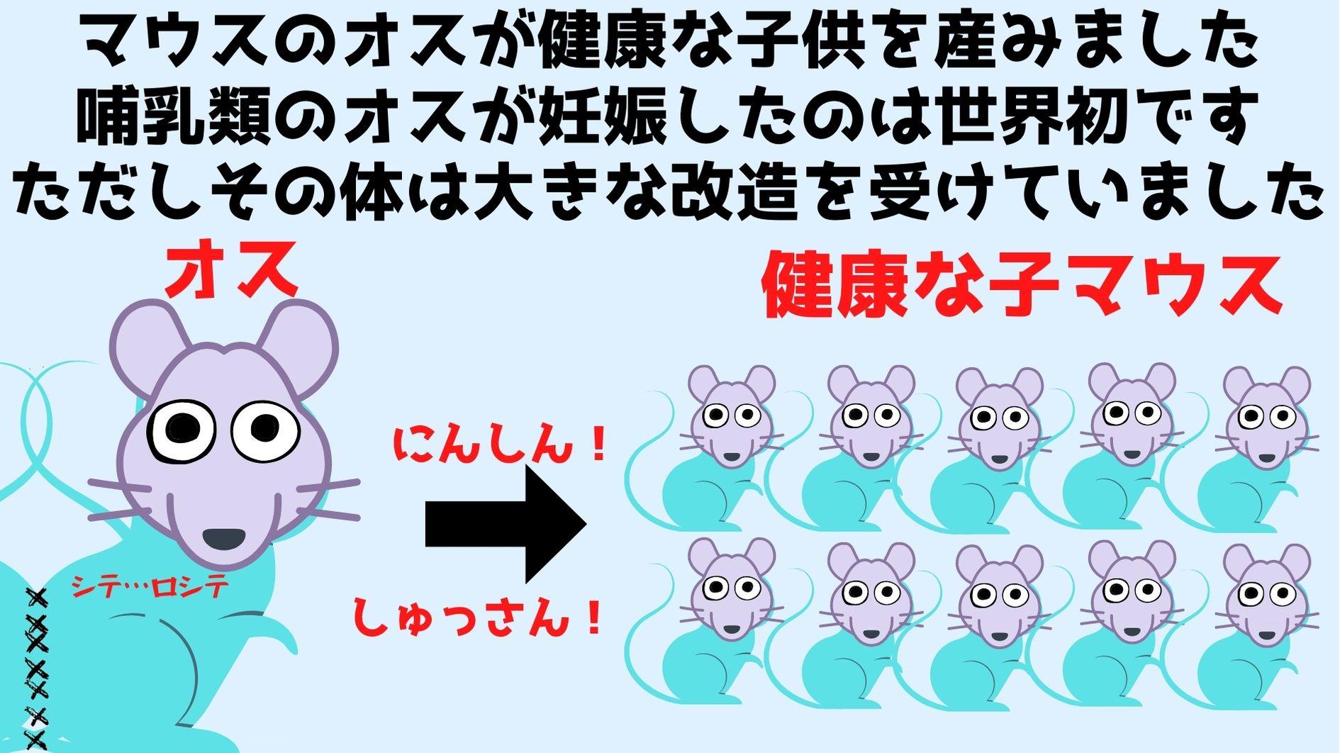 メスと体を縫い合わせ「子宮移植されたオスマウス」が出産成功